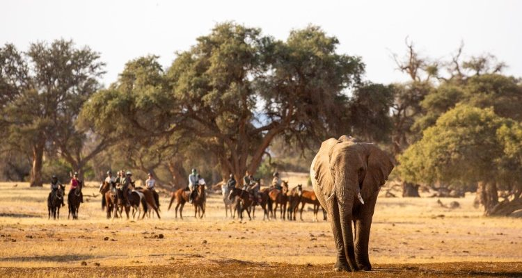 Hosted Namibia Riding safari with Alice Gully