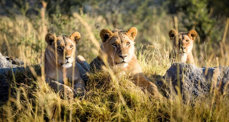 Lions – on and off the pitch