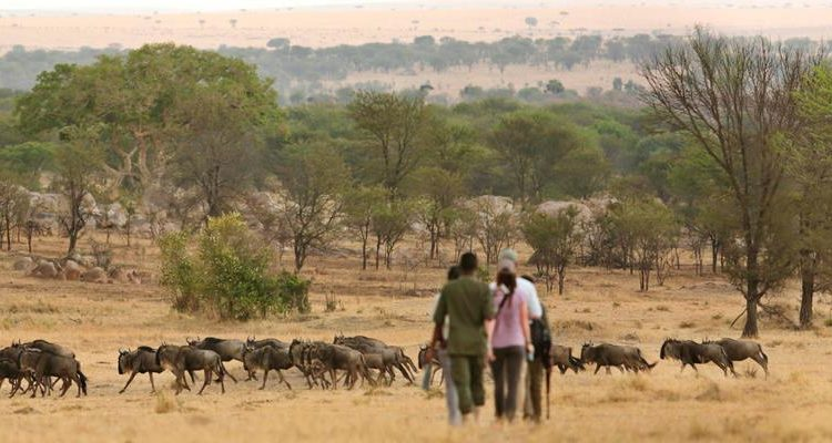 The Serengeti without a vehicle
