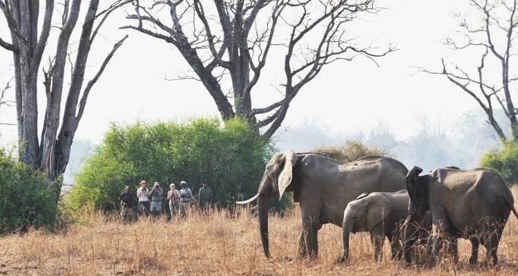 Safari in Zambia – South Luangwa without a vehicle