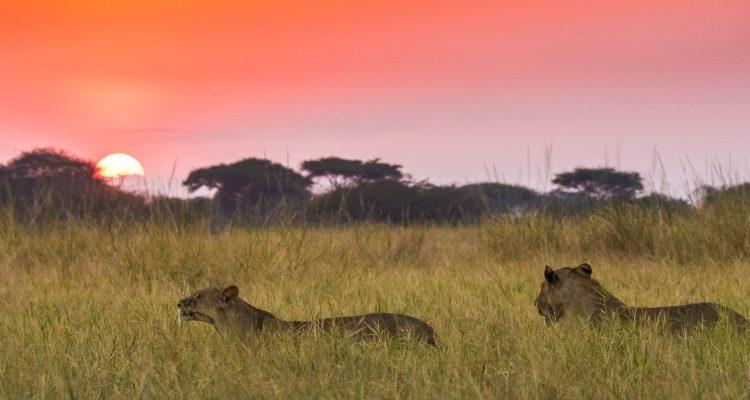Where to safari when – our African calendar