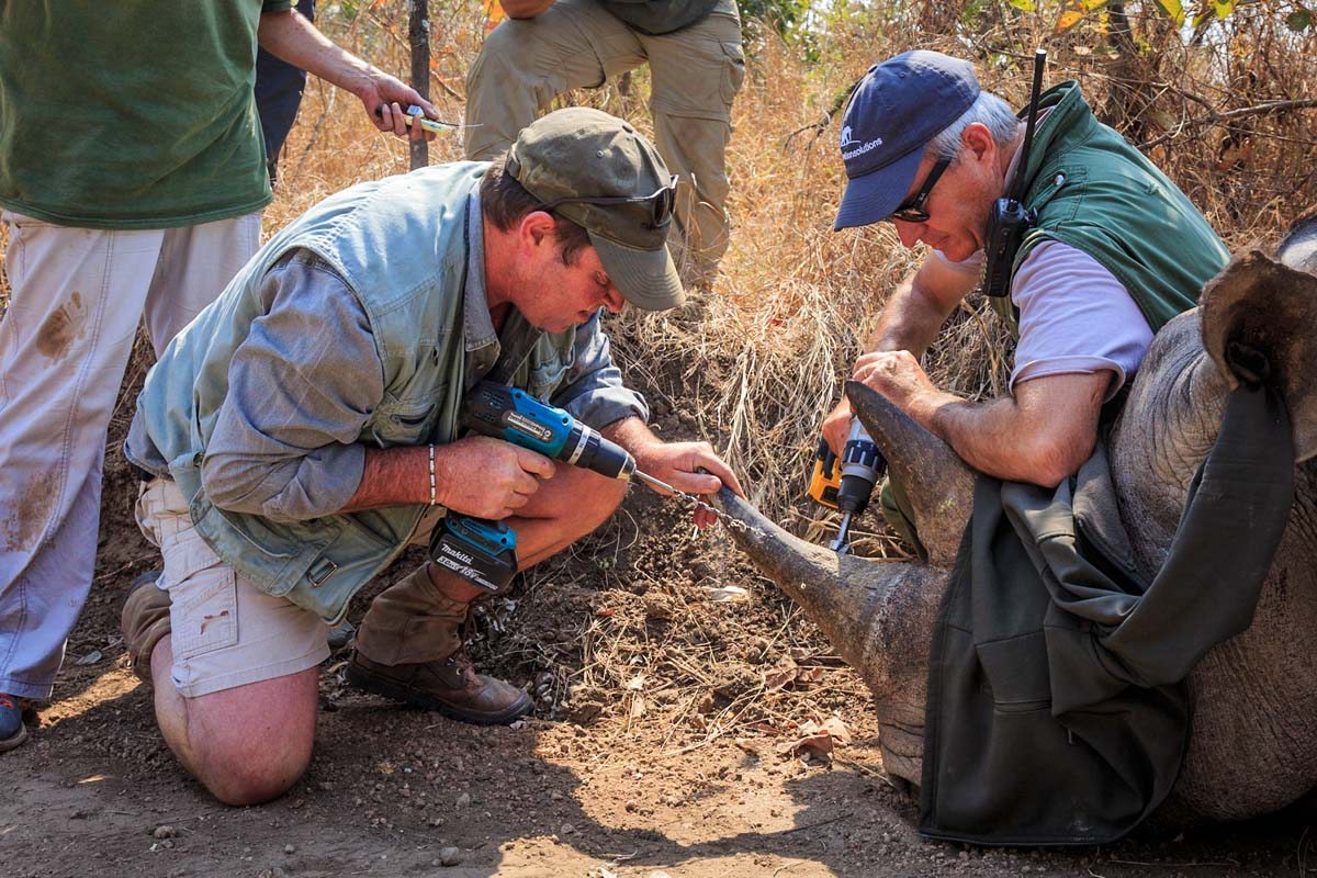 Marataba Conservatio Camps, conservation in action