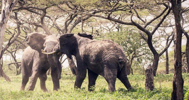 Waterhole – Africa's Animal Oasis with Chris Packham