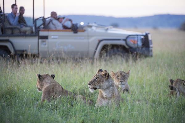 Singita Sasakwa wildlife drive