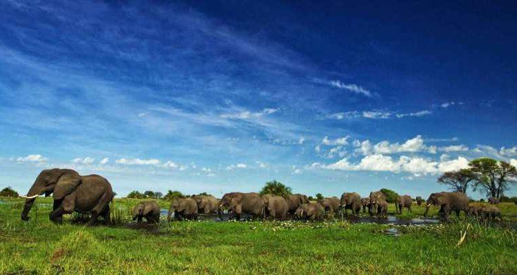 One country safari – Botswana
