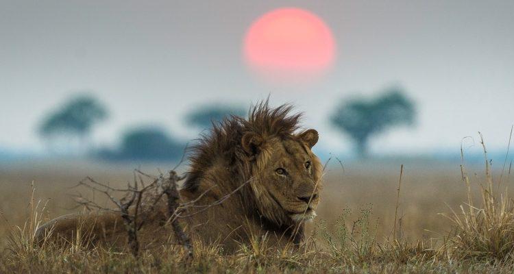 One country safari – Zambia