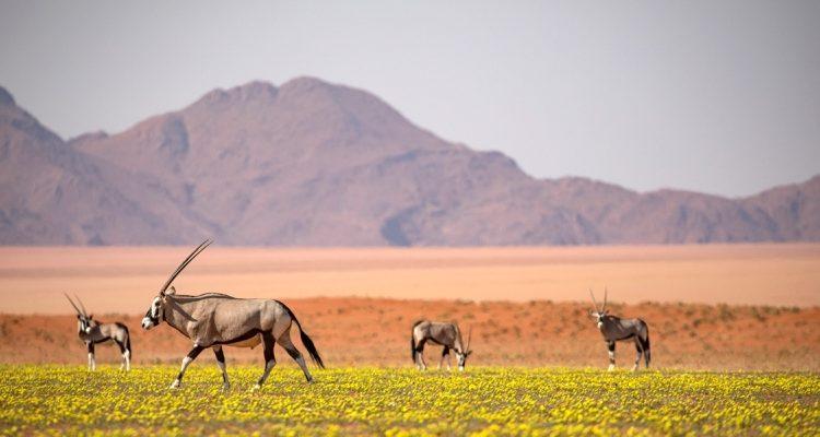 One country safari – Namibia
