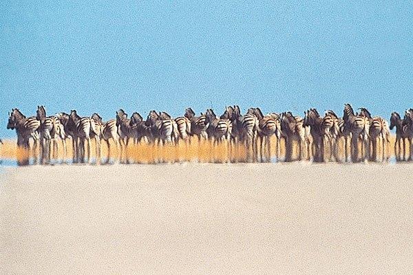 San Camp, zebra and wildebeest migration