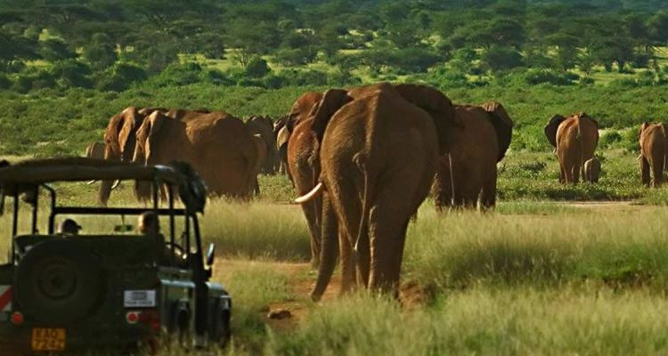Kenya's Elephants in David Attenborough's A Perfect Planet