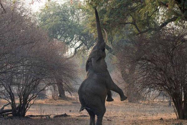 Elephant Goliath Safaris