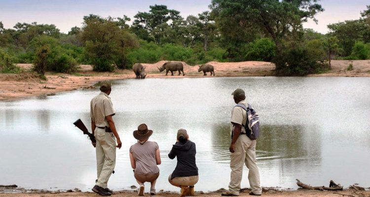 The guides' tales – close calls and memorable moments with the wildlife