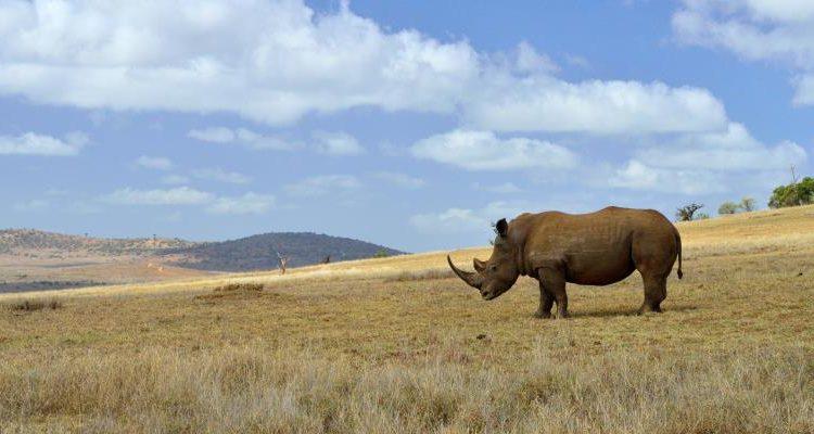 Borana Conservation Safari