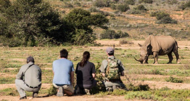 Kwandwe Rhino Conservation Safari