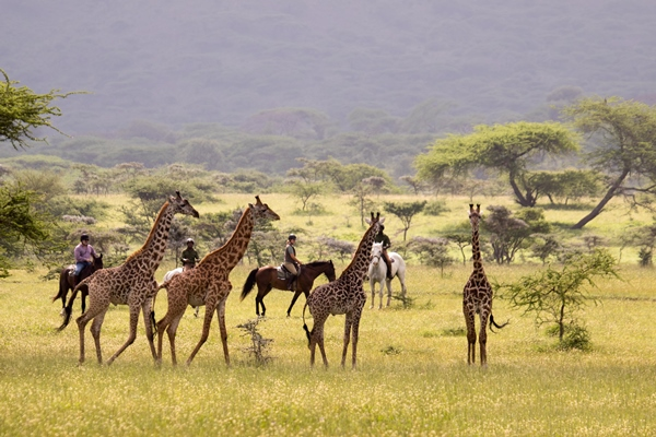 Explore Africa's wilderness