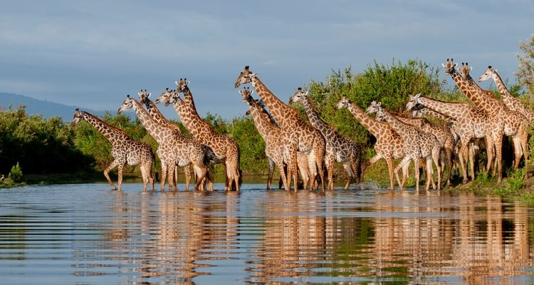 Dream safari to plan – Tanzania Safari Superstar