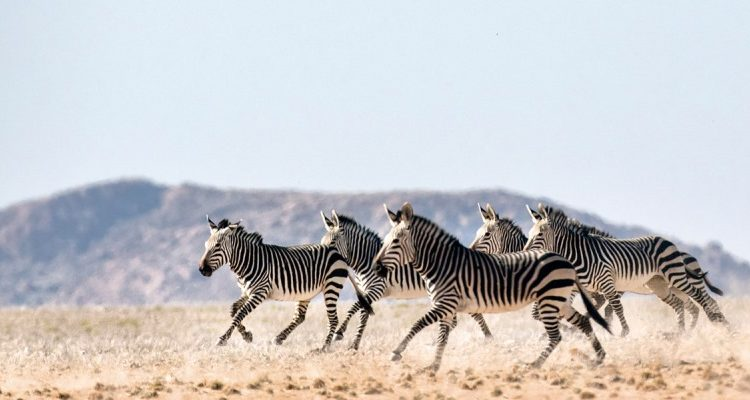 Dream safaris to plan now – Spectacular Namibia