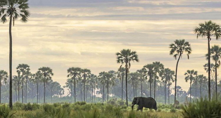 Dream safari holidays to plan – Brillant Botswana