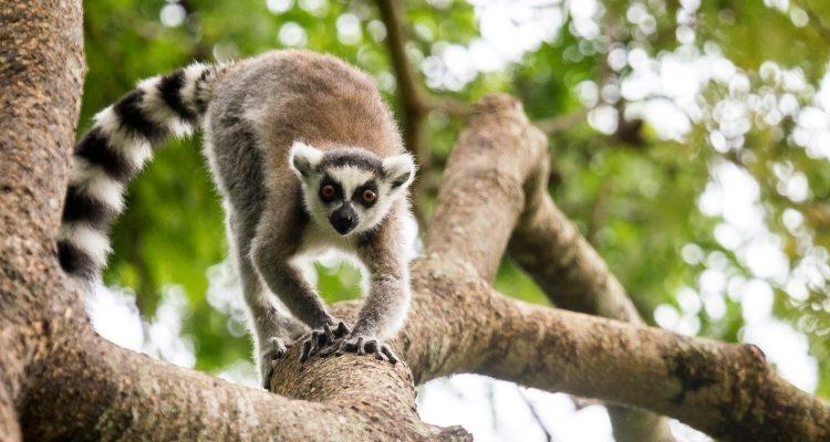 Madagascar is go!